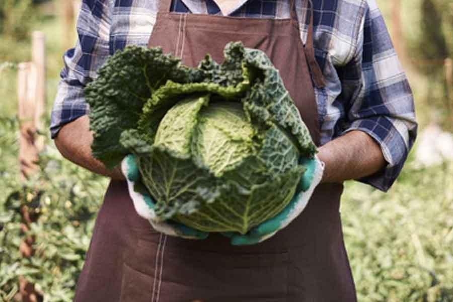 Ci-sono-dei-rischi-nel-consumare-questo-tipo-di-dieta-del-cavolo