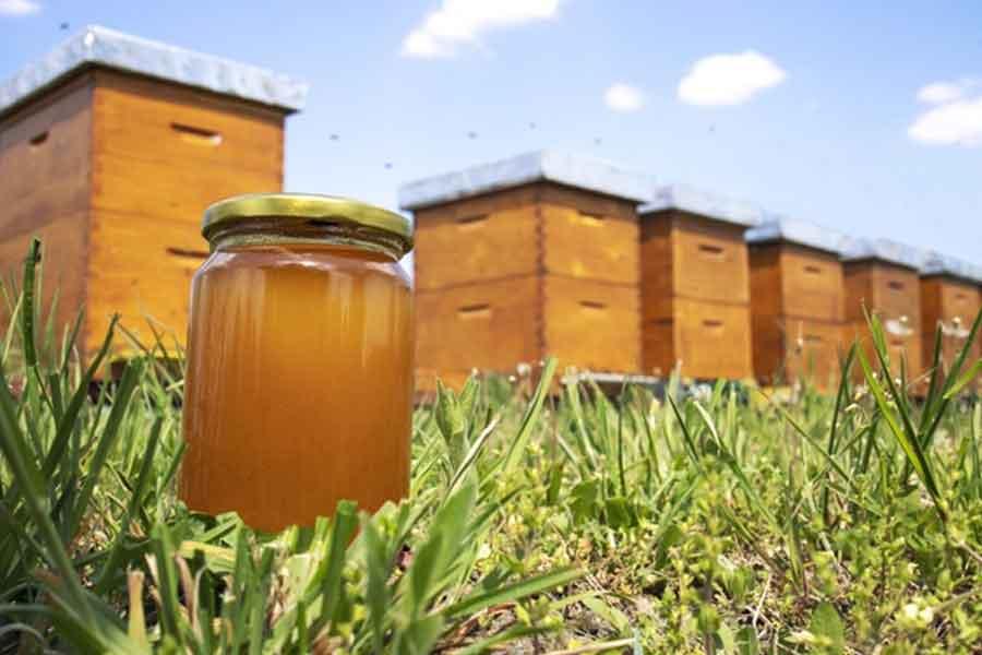 Come può il miele aiutare ad avere un'erezione migliore